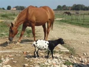 Immagine del cavallo Diddi