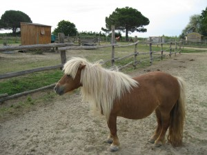 Immagine del pony Lola
