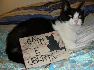 Foto della gatta Micia con la bibbia dell'anarchia felina della Troglodita Tribe